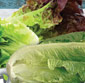 Picture of Homegrown Romaine, Red or Green Leaf Lettuces